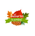 autumn leaf badge of autumnal forest nature vector image