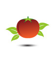 tomato image design template vector image vector image