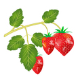 berry strawberries vector image vector image