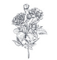 hand drawn rose flowers branch isolated on white vector image vector image