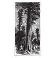 big trees of california vintage vector image vector image