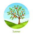 summer landscape with green tree and apples vector image vector image