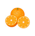 three orange fruits whole and slices vector image