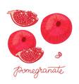 pomegranate fruit set vector image