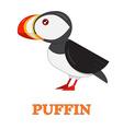 Puffin Sea Bird Icon vector image