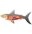 Anatomy of a shark vector image vector image
