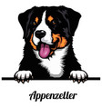 appenzeller - dog breed color image a dogs vector image vector image