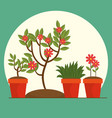beautiful flowers and plants cultivated in pot vector image