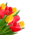Bouquet with red and yellow flowers in white vector image