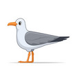 laridae bird on a white background vector image vector image