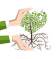 planting a tree with roots plant in human hands vector image