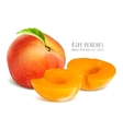 Ripe peaches whole and half cut slices vector image vector image