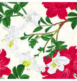 seamless texture flowers white and red vector image vector image