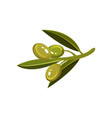 sprig with green glossy olives and leaves natural vector image