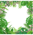 square frame with tropical plants and liana vector image