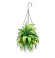 A hanging pot with green plants vector image