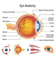 eyeball medical anatomy icons set cartoon style vector image vector image