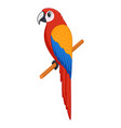 macaw bird on a white background vector image vector image