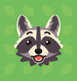 racoon emotional head of cute vector image vector image