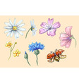 lady bug flying with flowers set collection vector image