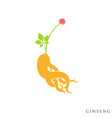 red ginseng vector image