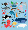 Sea animals underwater animal creatures