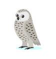 icon cute white polar owl with big eyes forest vector image