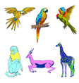color set of animals parrots vector image