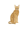 african serval in sitting position wild cat with vector image