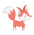 cute fox with big tail standing on white vector image