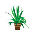 indoor pot plant home floral green cartoon vector image vector image