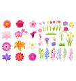 set different flowers color vector image
