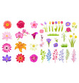 set of different flowers color vector image vector image