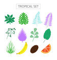 set with tropical leaves and fruits icons vector image vector image