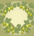 background gooseberry vector image vector image