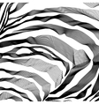 Zebra Stripes Pattern outline background vector image vector image