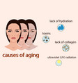 causes of aging with two vector image vector image