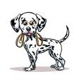 Dalmatian Puppy vector image vector image