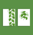 design with green leaves ginko biloba vector image