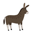 donkey funny donkey or mule isolated on vector image