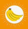 fresh bananas fruit healthy food vector image