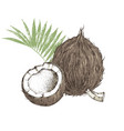hand drawn coconut with half and leaves vector image vector image
