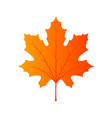 maple leaf foliage canada colorful beautigul vector image vector image
