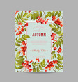 autumn photo frame with rowan berry vector image vector image