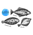ink sketch flatfish vector image vector image