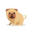 cute cartoon angry pug dog character vector image vector image