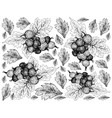 hand drawn wallpaper of ripe jostaberries on white vector image vector image