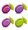 Plums vector image vector image