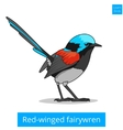 Red winged fairywren bird educational game vector image vector image