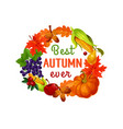 autumn leaf harvest vegetable and fruit poster vector image